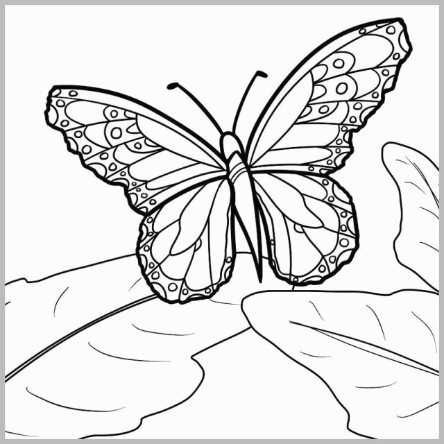 Free Butterfly Coloring Pages Coloring Pages Of Butterflies Amazing Free Butterfly Coloring Pages