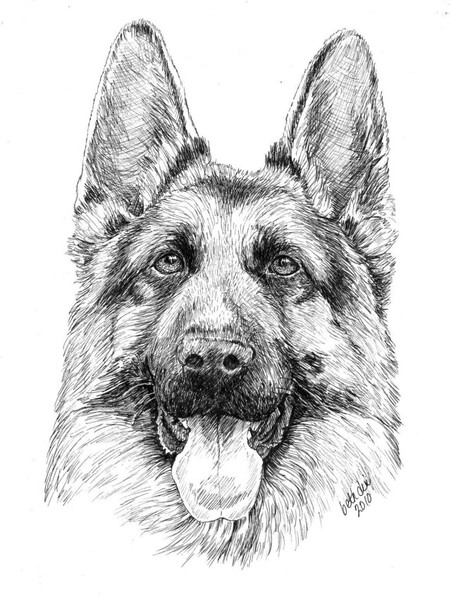 German Shepherd Coloring Pages Cartoon German Shepherd Puppy Coloring Page Coloring Pages For