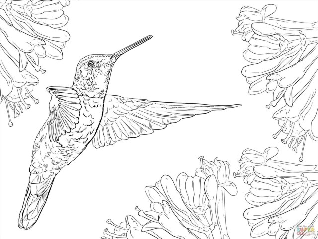 Rick And Morty Coloring Pages Hummingbird Coloring Pages For Adults Awesome Photography Rick And