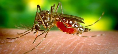 Mosquito Repellents: DEET and PMD Sprays Most Effective, While Wearable Devices Disappoint, Study Finds