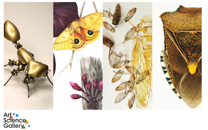 Image Credits L-R Matt Norris, Mindy Lighthipe, Marjorie Moore, Cornelia Hesse-Honegger