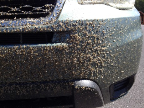 mayflies-car
