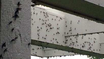 mayflies-bridge