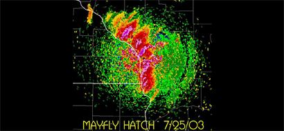 mayflies-radar