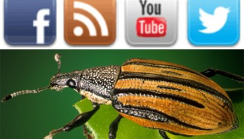 Insect Identification: Experts and Guides to ID That Bug You Found