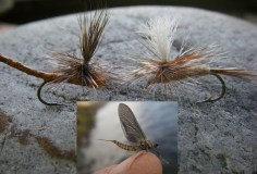 These flies, tied by Buchner, imitate the common burrower mayfly (Ephemera simulans) and other mayfly species, including a great red quill (Timpanoga hecuba) shown in the inset photo, in either the adult or subimago/dun forms. The fly on the left is an extended-body brown drake pattern, and the right is a parachute hare's ear pattern. Photos by Jay Buchner.