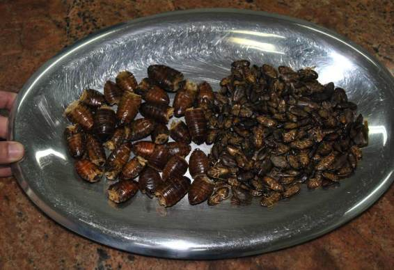 Food-grade cockroaches.
