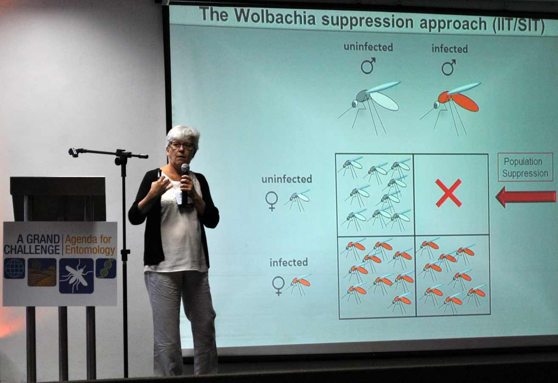 Dr. Margareth Capurro, University of São Paulo, talks about transgenic mosquitoes and Wolbachia.