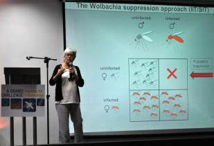 Dr. Margareth Capurro, University of São Paulo, talks about transgenic mosquitoes and Wolbachia.