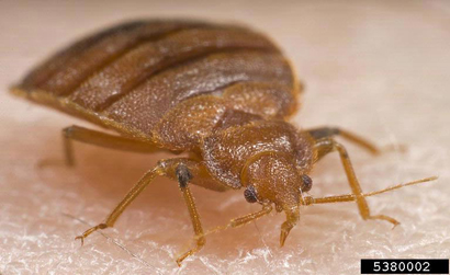 Which Insecticide Spray Should You Use For Bed Bug Eggs