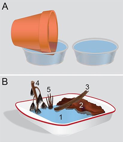 melanoconion mosquito egg-laying experiment setup