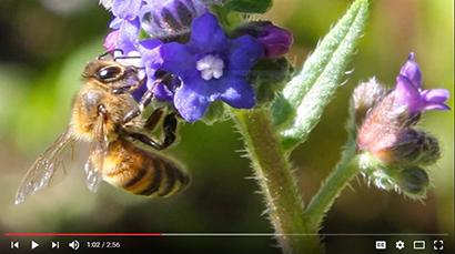 Wonderful World of Entomology Playlist Screenshot