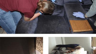 bed bug management methods