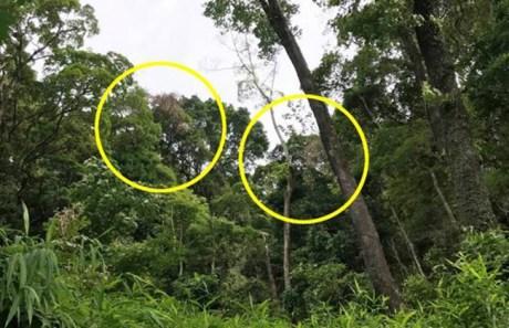 forest gap in Tai Po Kau Nature Preserve