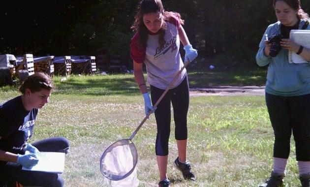 forensic entomology scene sweep net