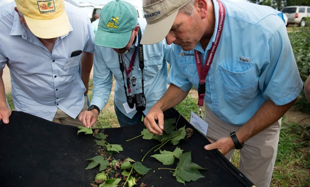 science policy field tour - cotton test plots