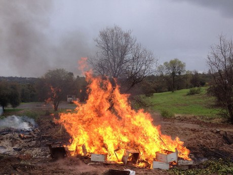 foulbrood bee hives aflame