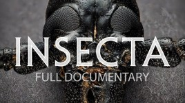 Insecta documentary screenshot