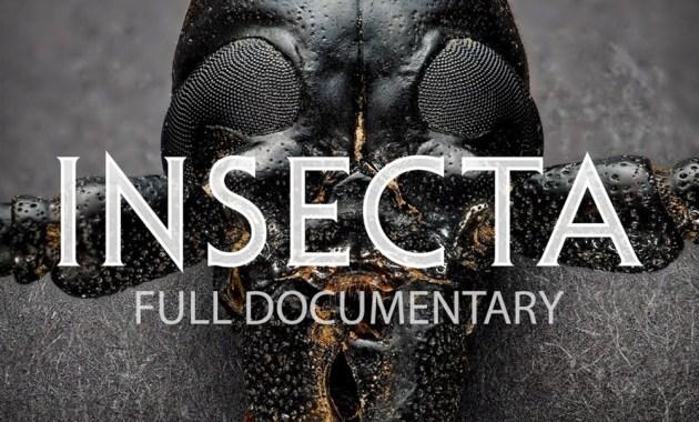 Insecta documentary screenshot
