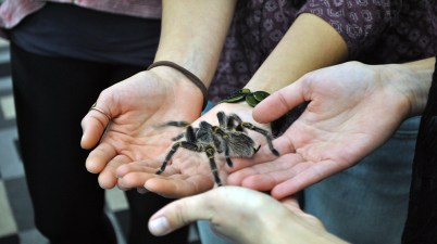 STEMbugs tarantula group 2