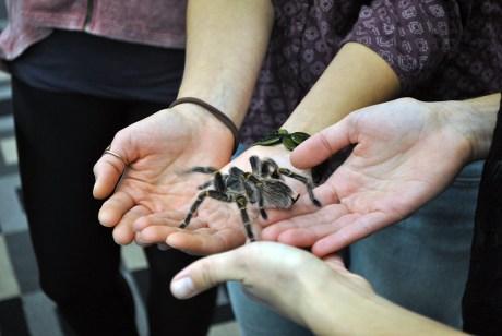 STEMbugs tarantula group 2