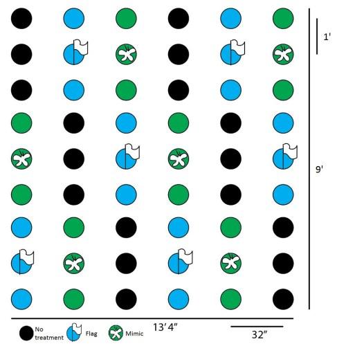 experiment diagram