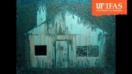 termites eat wooden house replica
