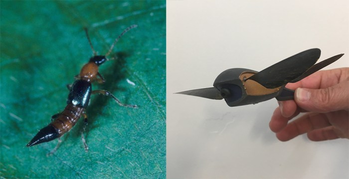 Paederus fuscipes rove beetle and Skeeter drone model