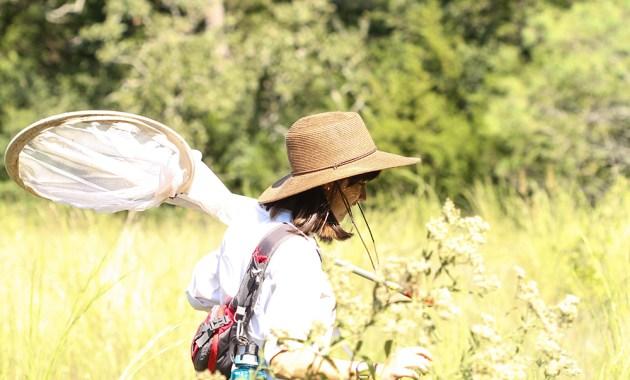 entomologist with sweep net