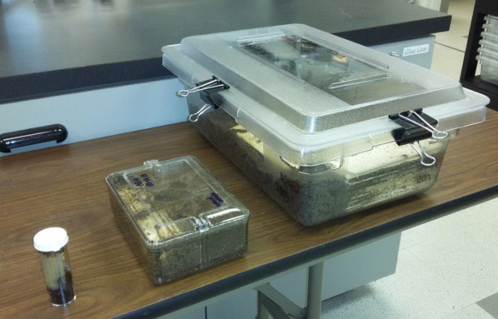 transfer containers for lab-reared termite colonies