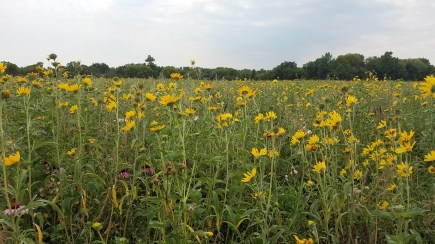 Bee and Butterfly Habitat Fund forage