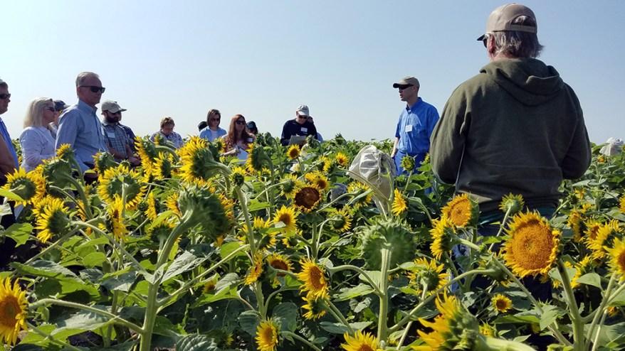 Tour participants at USDA-ARS and NDSU research farm