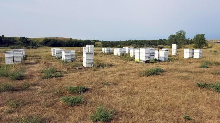 honey bee yard at Schulz's Farm