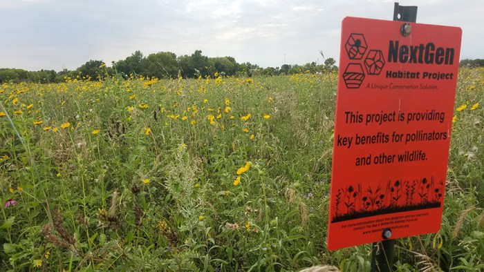 pollinator habitat at Schulz's Farm