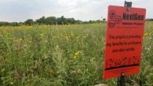 pollinator habitat at Schulz's Farm