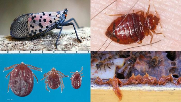 Entomology Today best of 2018