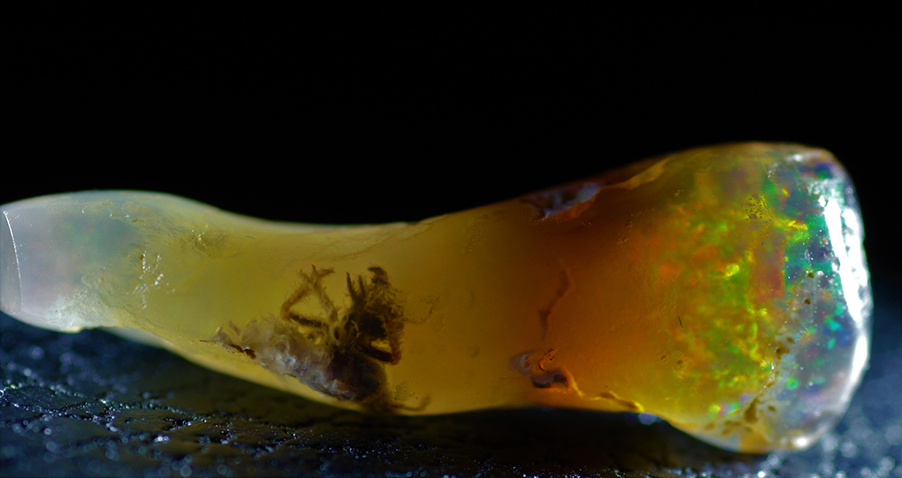 Fossilized Insect Discovered Not in Amber, But in Opal