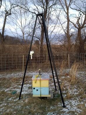 honey bee hive on scale