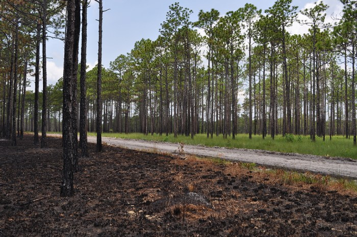 burned habitat