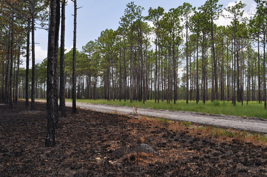 burned habitat