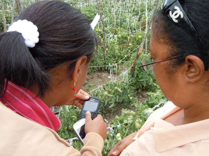 cellphone use in IPM