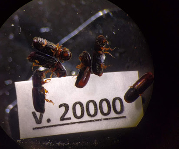 Collection of Frozen Beetles Passes 20,000 Vials