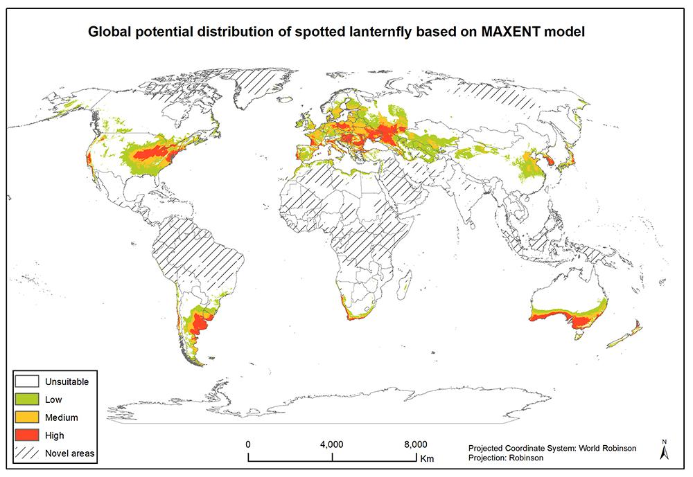 Опасные насекомые из Китая быстро распространяются по миру