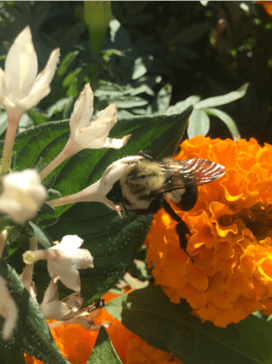 Bee foraging on a flower