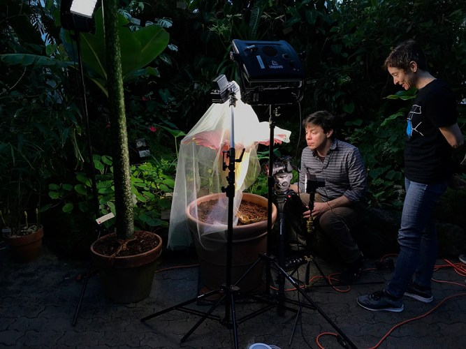 filming corpse flower