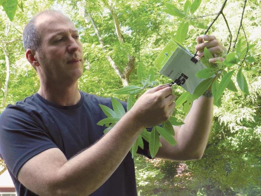 Don Cipollini checks emerald ash borer trap