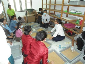 staff training at Trichogramma rearing facility in Laos