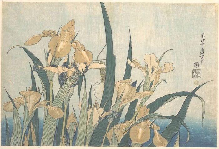 Grasshopper iris