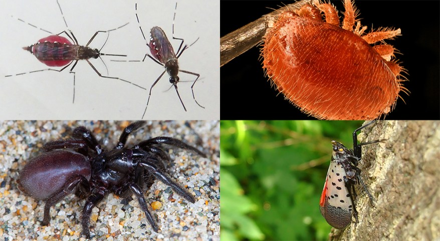 mosquitoes, mite, spider, and spotted lanternfly
