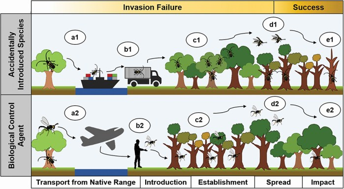 accidental invasions versus biological-control introductions